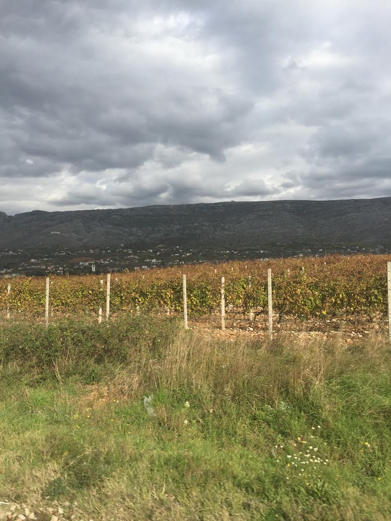 bosnian-vineyards-2
